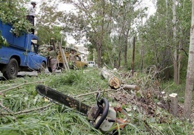 دستبرد مافیای چوب به جنگلهای هیرکانی/آیا برخی معتادان اقدام به قاچاق سازمان یافته چوبهای جنگلی میکنند؟