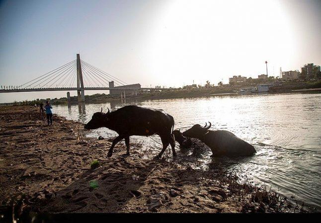 حال ناخوش رودخانه کارون